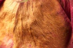 Pétalos color de rosa secos Fotografía de archivo