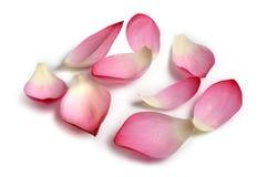 Pétalos de la flor Imagenes de archivo