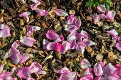 Pétalos de Rose rosada Imagen de archivo libre de regalías