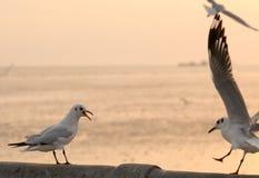 Ptasi śpiew odpędzać inny jeden Obrazy Stock