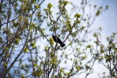 Ptasi śpiew wśród zielonych kwiatów Fotografia Royalty Free