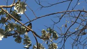 Ptasi Costa Rica zdjęcie wideo