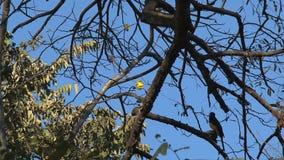 Ptasi Costa Rica zbiory