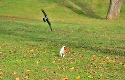 Ptasi cyzelatorstwo pies w parku zdjęcie royalty free