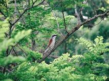 ptasi czarny lasu trawy zieleni pardwy obsiadanie obrazy stock