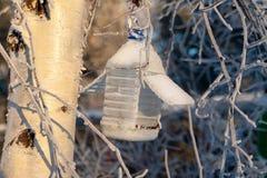 Ptasi dozownik zimy obwieszenie na drzewie zdjęcia royalty free