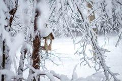Ptasi dozownika obwieszenie na drzewie w śnieżnym sosnowym lesie zdjęcia royalty free