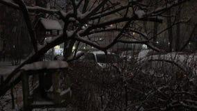 Ptasi dozowniki w zimie zdjęcie wideo
