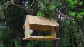 Ptasi dozowniki wieszają na gałąź w lato lesie zbiory wideo