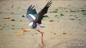 Ptasi dzikiego zwierzęcia latać kolorowy Obraz Stock