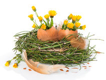 ptasi Easter jajek gniazdeczko Fotografia Stock