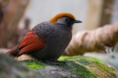 ptasi egzotyczny drzewo Zdjęcie Royalty Free