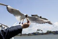 Ptasi karmienie obraz stock