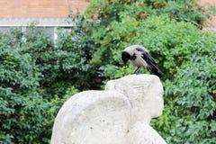 ptasi kruk siedzi na głowie statua anioła który ostrożnie wprowadzać wandale szczerbiący się, obraz royalty free