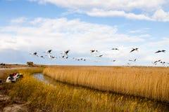 ptasi latający fotografów obrazka zabranie Obrazy Stock