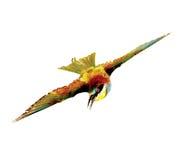 ptasi latanie Fotografia Royalty Free
