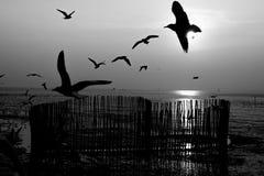 Ptasi latanie na niebach evening zaświecać przed zmierzchem fotografia stock