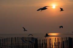 Ptasi latanie na niebach evening zaświecać przed zmierzchem obrazy stock