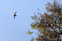 Ptasi latanie nad błękita jasnego niebem Fotografia Royalty Free