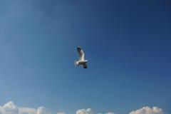 Ptasi latanie nad chmury przestrzenią dla teksta Obrazy Stock