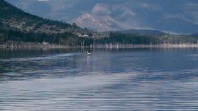 Ptasi latanie nad jeziornym moogerah zbiory
