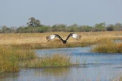Ptasi latanie nad wodą zdjęcia stock