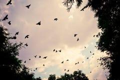 Ptasi latanie w niebie Zdjęcia Stock