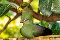 Ptasi obsiadanie na drewnianej żerdzi fotografia royalty free