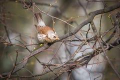 Ptasi obsiadanie na gałąź Zdjęcia Stock
