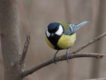 Ptasi obsiadanie na gałąź zdjęcia royalty free