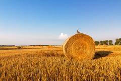 Ptasi obsiadanie na słomianej beli, lato krajobraz Fotografia Royalty Free