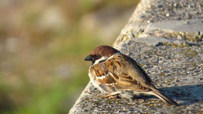 Ptasi obsiadanie na skale Obrazy Stock