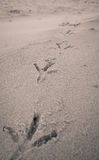 Ptasi odciski stopy na piasek plaży Zdjęcia Stock