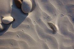 Ptasi odciski stopy na piasku z round kamieniami Zdjęcia Royalty Free