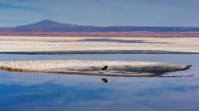 Ptasi odpoczywać na jeziora krawędzi Fotografia Stock