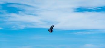 Ptasi okrąg w niebie fotografia royalty free