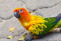 Ptasi papuzi piękny w zoo Fotografia Stock