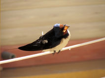Ptasi patrzeć dla coś jeść Obrazy Royalty Free