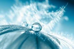 Ptasi piórko w błękitnych odcieniach z kroplą woda Abstrakt, piękny makro- Selekcyjna miękka ostrość obrazy royalty free