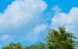 ptasi ptaków lota sylwetki niebo Fotografia Stock