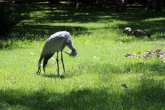 Ptasi ptaków spojrzenia underneath Obrazy Royalty Free