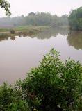 ptasi rezerwat przyrody wierza target880_1_ Zdjęcie Royalty Free