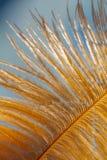 Ptasi ` s piórko Zakończenie makro- fotografia Obrazy Royalty Free