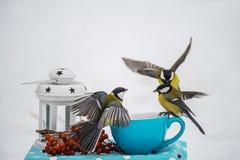 Ptasi titmouse w locie w zima parku siedzi na małym porcja stole Fotografia Stock