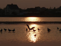 Ptasi wschód słońca Obrazy Royalty Free