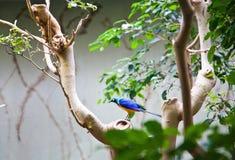 Ptasi zwrotniki Ueno zoo Tokio Japonia Fotografia Stock