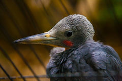 Ptasi zwrotniki Ueno zoo Tokio Japonia obraz royalty free