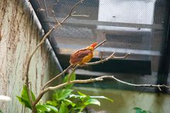 Ptasi zwrotniki Ueno zoo Tokio Japonia Fotografia Royalty Free