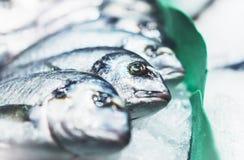 Ptasia dorado ryba na lodowym tle na rynku, closup świezi morscy produkty, pożytecznie żywienioniowy denny jedzenie w restauraci, zdjęcia royalty free