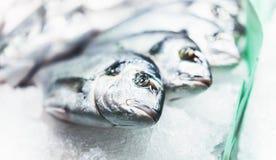 Ptasia dorado ryba na lodowym tle na rynku, closup świezi morscy produkty, pożytecznie żywienioniowy denny jedzenie w restauraci, fotografia royalty free